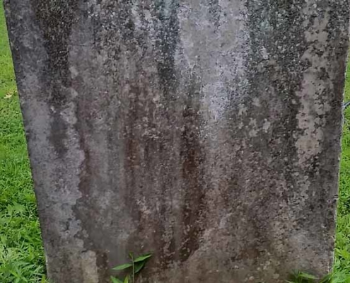 TP shows an old gravestone surrounded by periwinkle